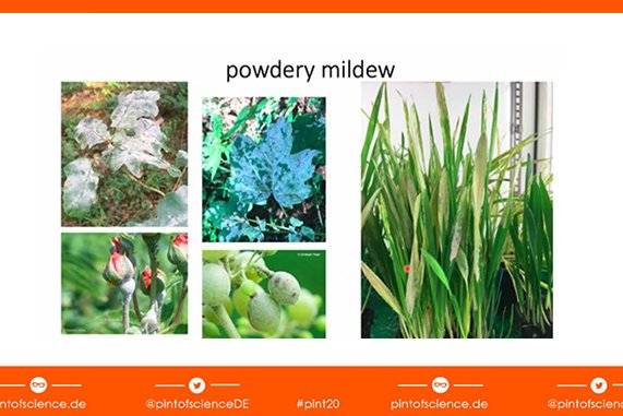 slides with images of powdery mildew on fruits and leaves of different plants