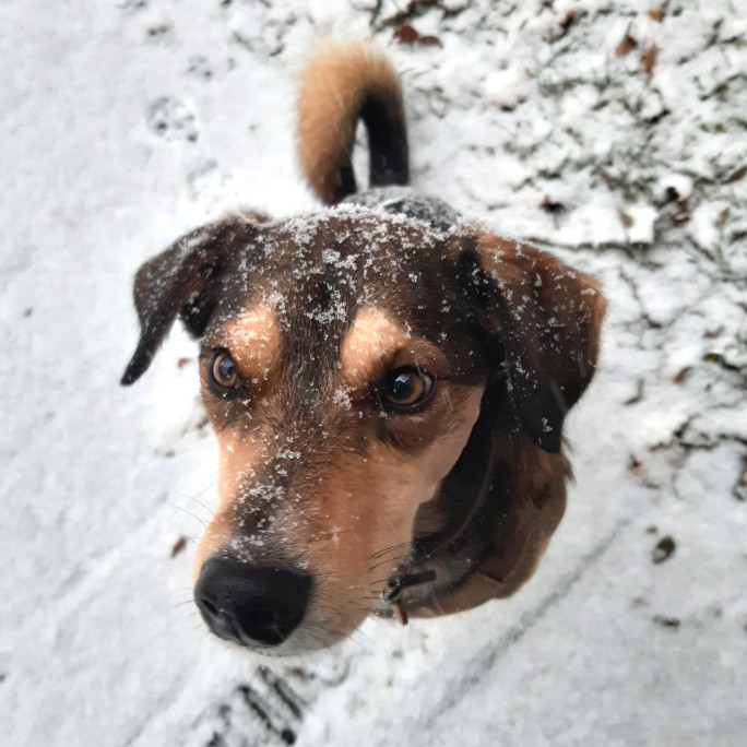 Dog Willy in the snow